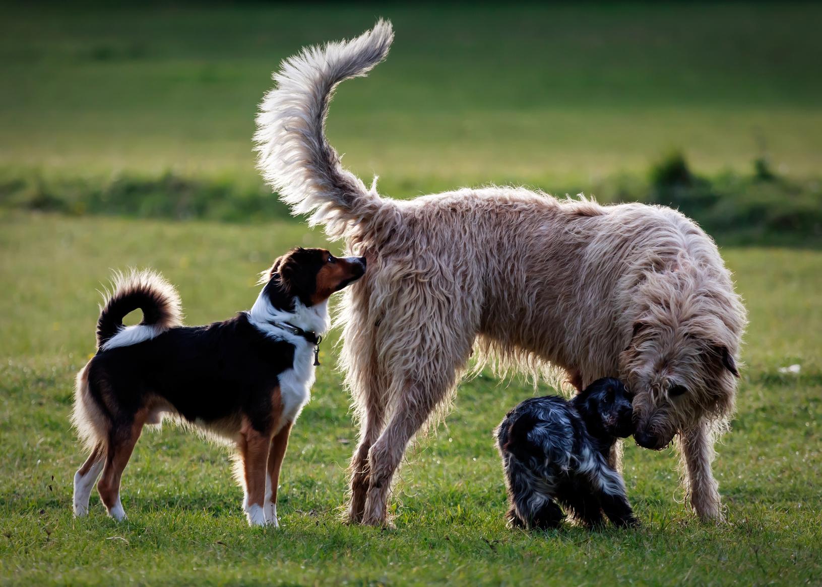 socialización perros