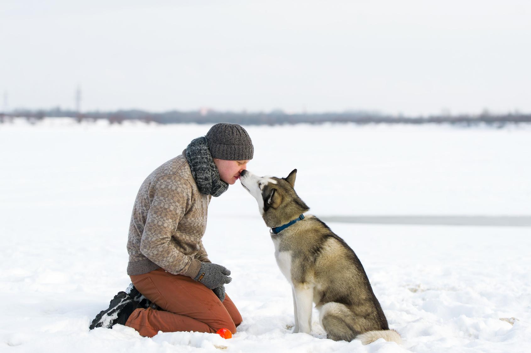 Amistad perro