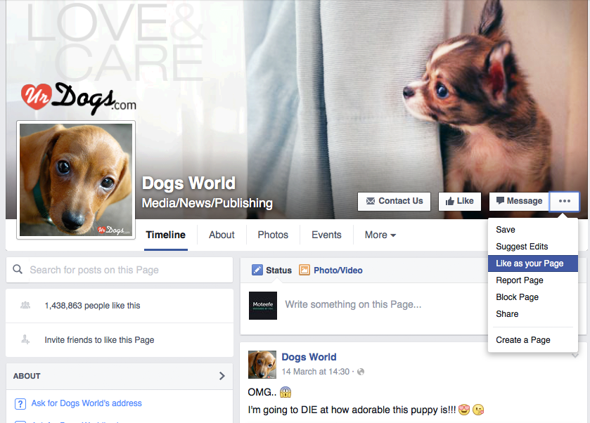 niche page, facebook, audience, finding your audience