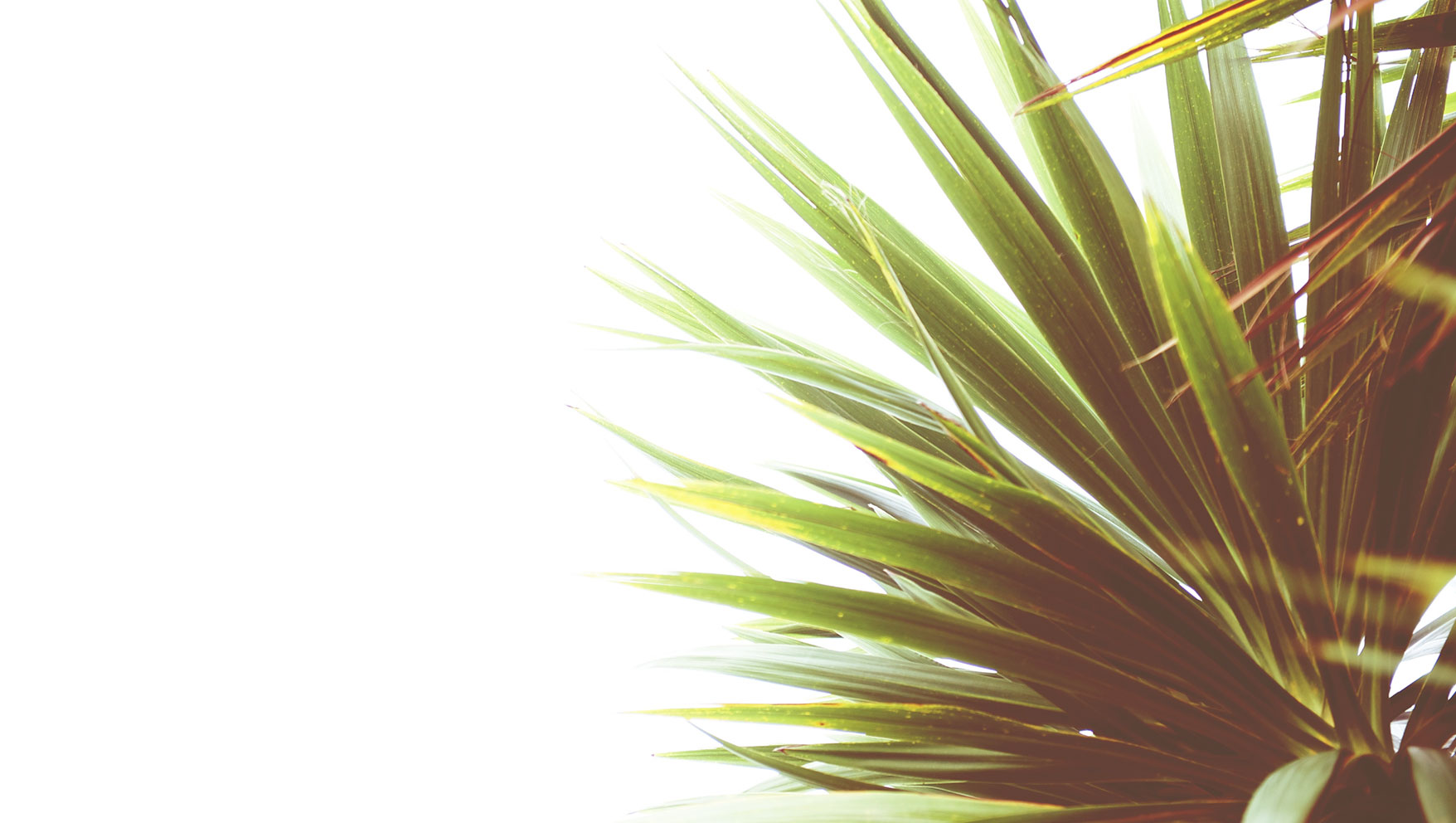 Holy Week History: What is Palm Sunday
